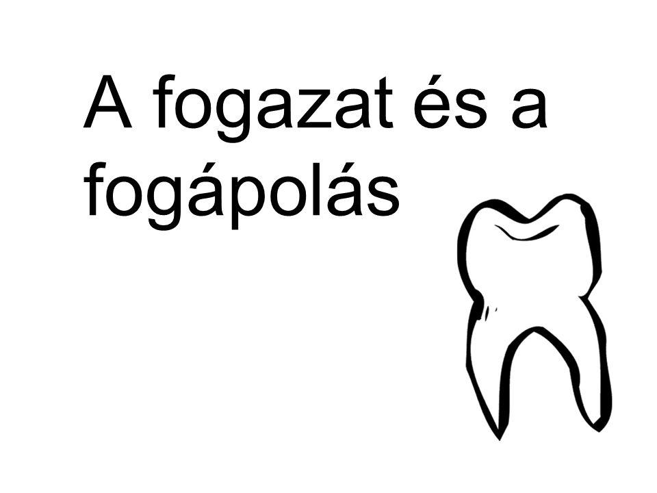 A fogazat és a fogápolás