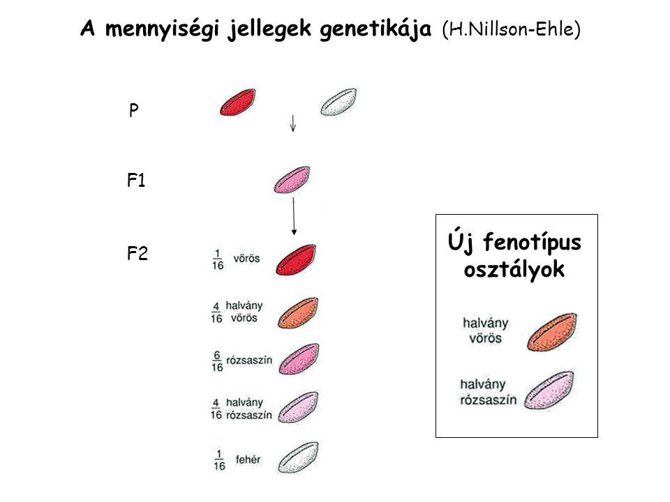 Új fenotípus osztályok