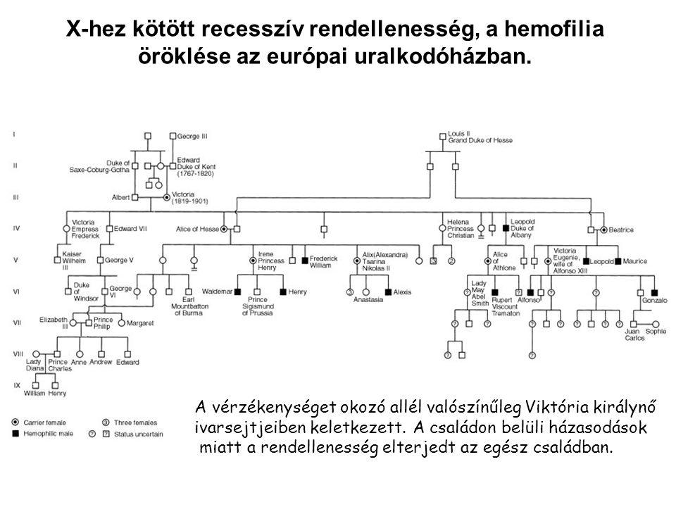 X-hez kötött recesszív rendellenesség, a hemofilia öröklése az európai uralkodóházban.