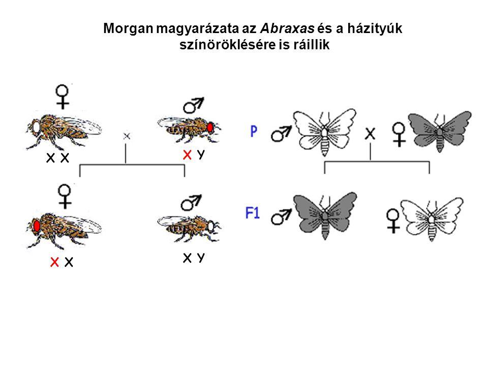 Morgan magyarázata az Abraxas és a házityúk színöröklésére is ráillik