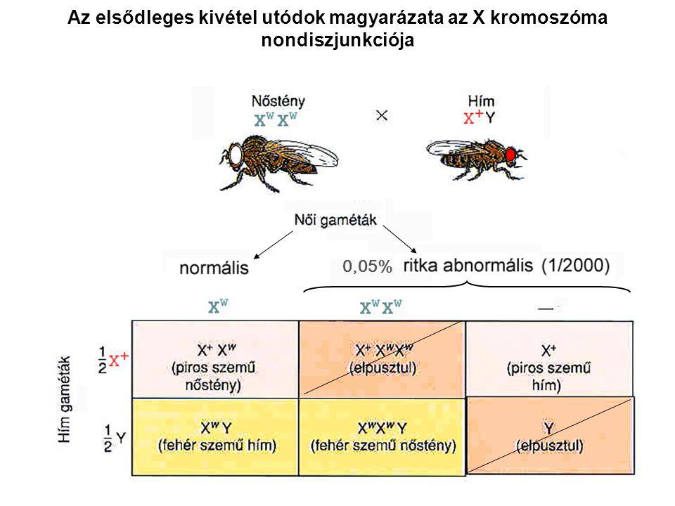 Az elsődleges kivétel utódok magyarázata az X kromoszóma nondiszjunkciója