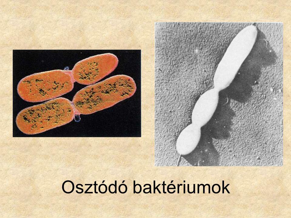 Bal oldali kép: Biológia 9 - Az élőlények teste élete és környezete, Mozaik Kiadó, 2002.
