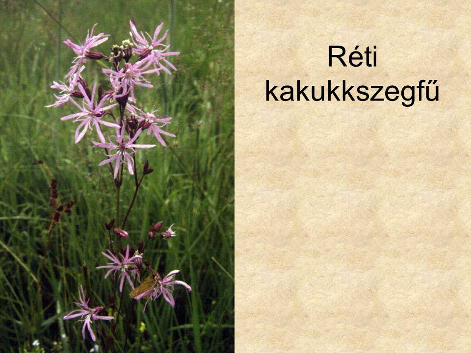 Réti kakukkszegfű Hazánk növényvilága CD, Terra alapítvány