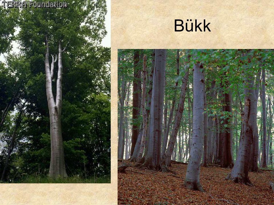 Bükk Bal oldali kép: Hazánk növényvilága CD, Terra alapítvány