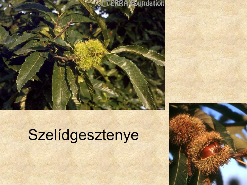 Bal oldali kép: Hazánk növényvilága CD, Terra alapítvány