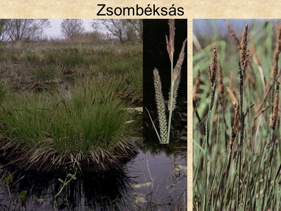 Zsombéksás Bal oldali kép: Hazánk növényvilága CD, Terra alapítvány