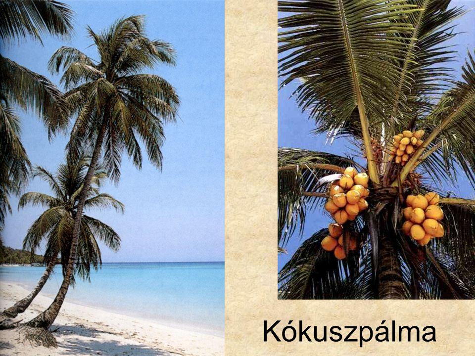 Jens G. Rohwer: A trópusok növényei, Magyar Könyvklub