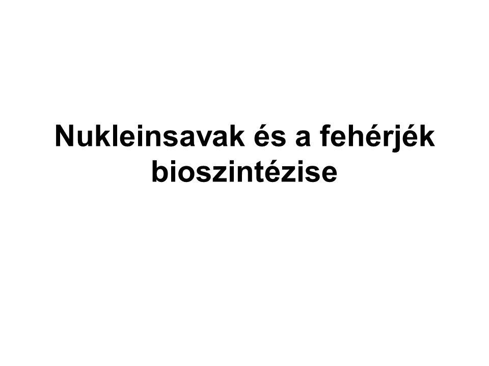 Nukleinsavak és a fehérjék bioszintézise