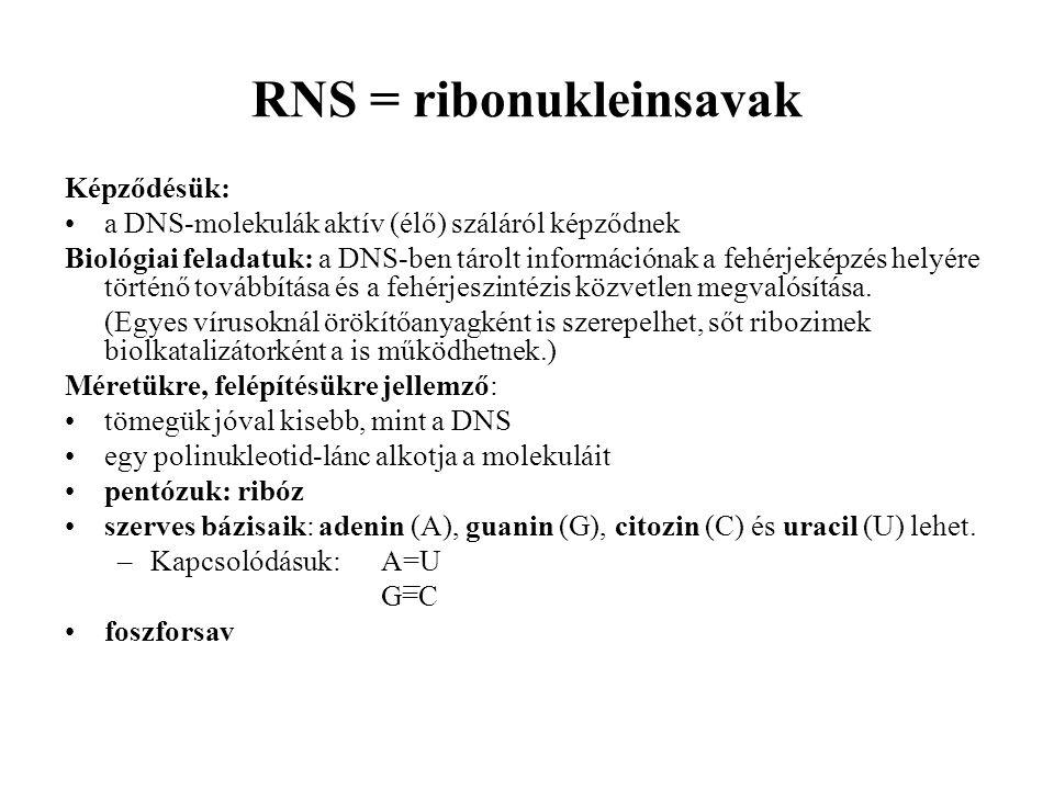 RNS = ribonukleinsavak