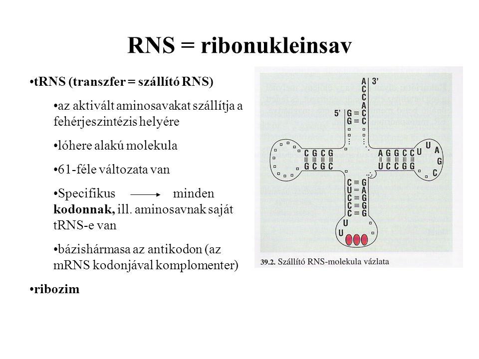 RNS = ribonukleinsav tRNS (transzfer = szállító RNS)