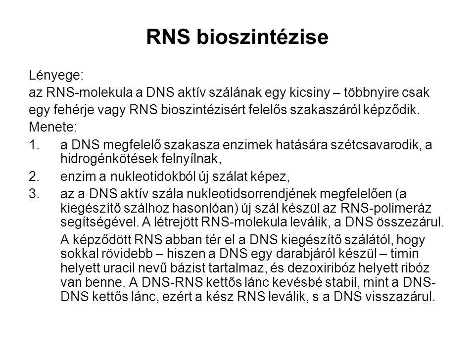 RNS bioszintézise Lényege: