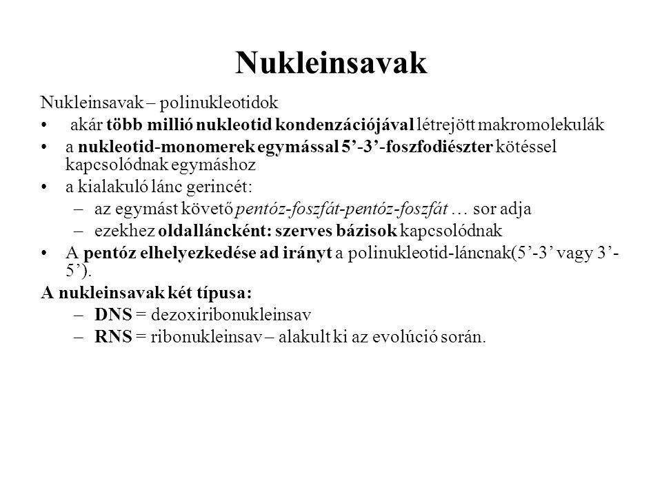 Nukleinsavak Nukleinsavak – polinukleotidok