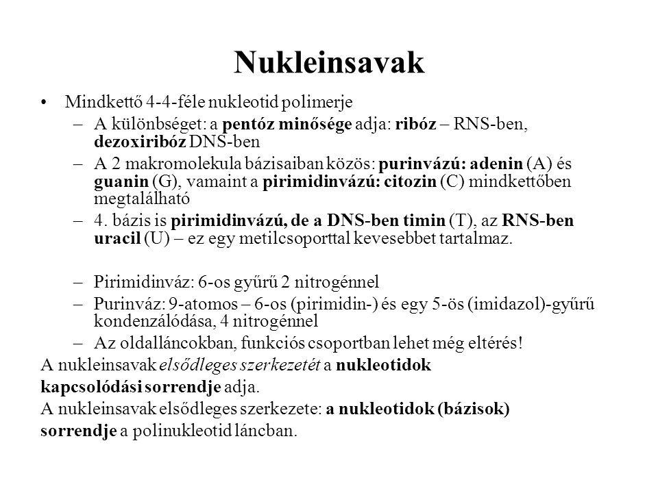 Nukleinsavak Mindkettő 4-4-féle nukleotid polimerje