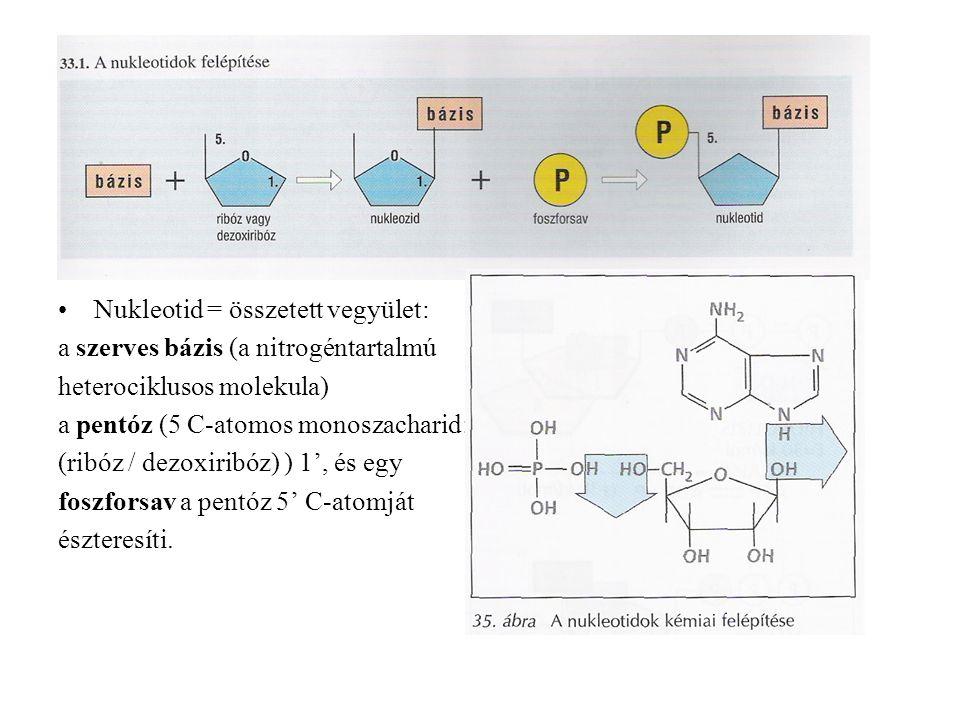 Nukleotid = összetett vegyület:
