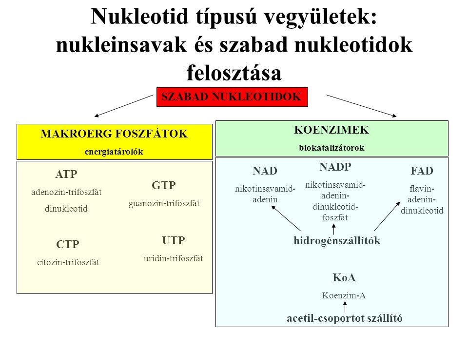 Nukleotid típusú vegyületek: nukleinsavak és szabad nukleotidok felosztása