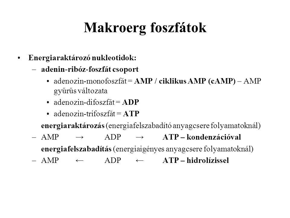 Makroerg foszfátok Energiaraktározó nukleotidok: