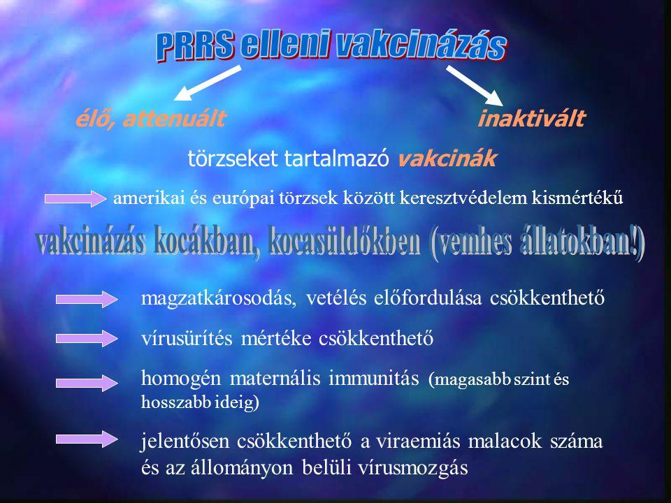 vakcinázás kocákban, kocasüldőkben (vemhes állatokban!)
