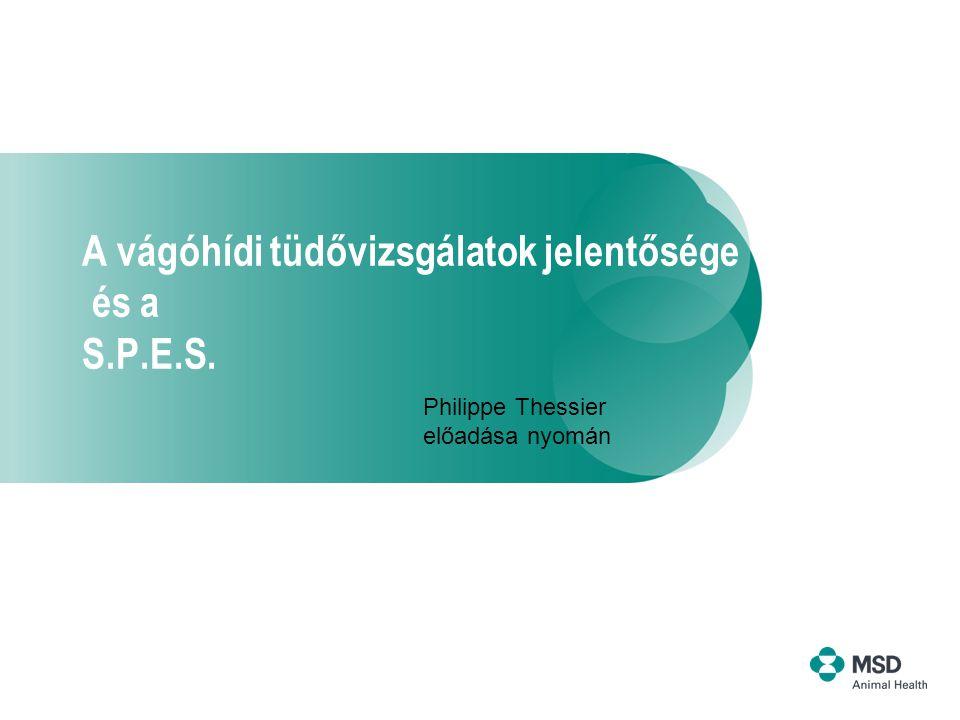 A vágóhídi tüdővizsgálatok jelentősége és a S.P.E.S.