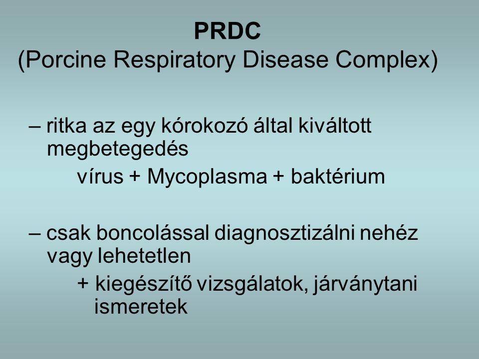 PRDC (Porcine Respiratory Disease Complex)
