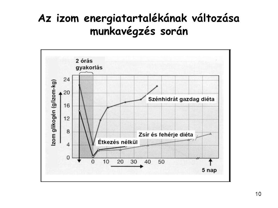 Az izom energiatartalékának változása