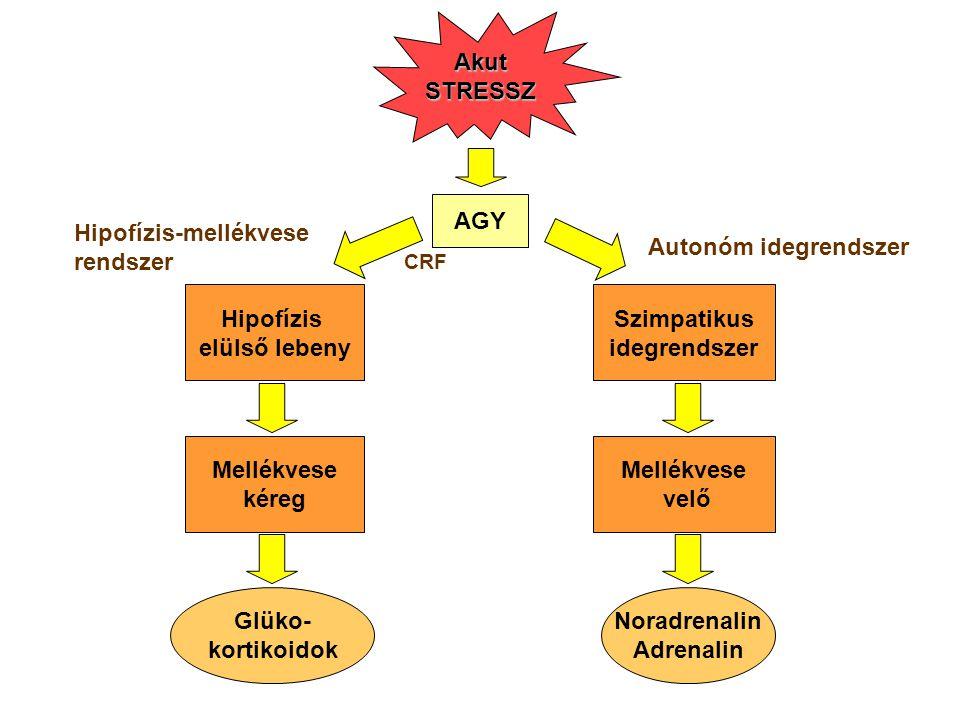 Hipofízis-mellékvese rendszer Autonóm idegrendszer