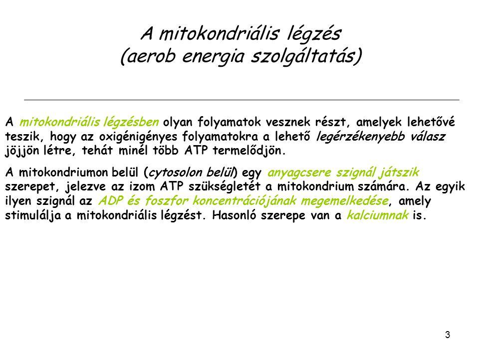A mitokondriális légzés (aerob energia szolgáltatás)
