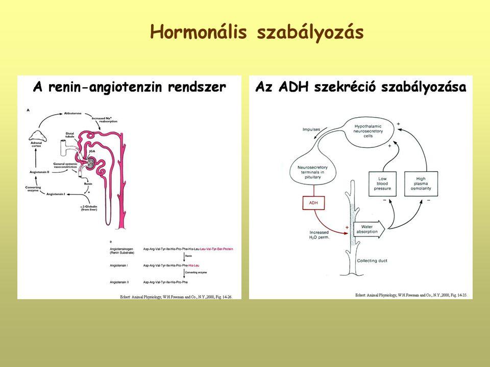 Hormonális szabályozás