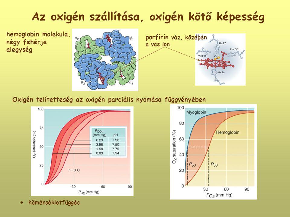 Az oxigén szállítása, oxigén kötő képesség