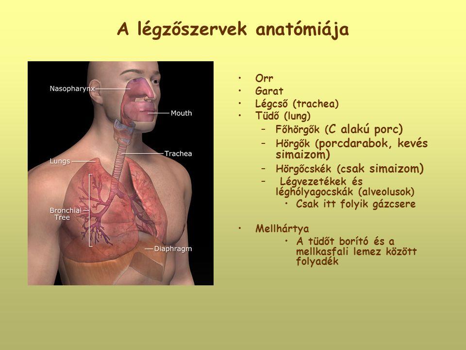 A légzőszervek anatómiája