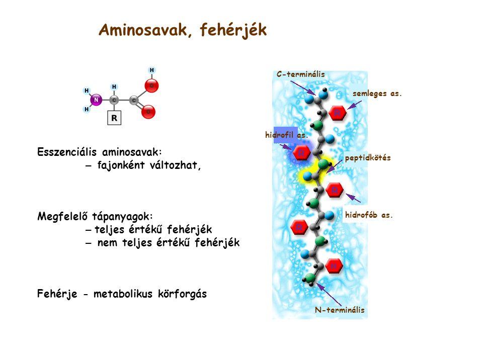 Aminosavak, fehérjék Esszenciális aminosavak: – fajonként változhat,
