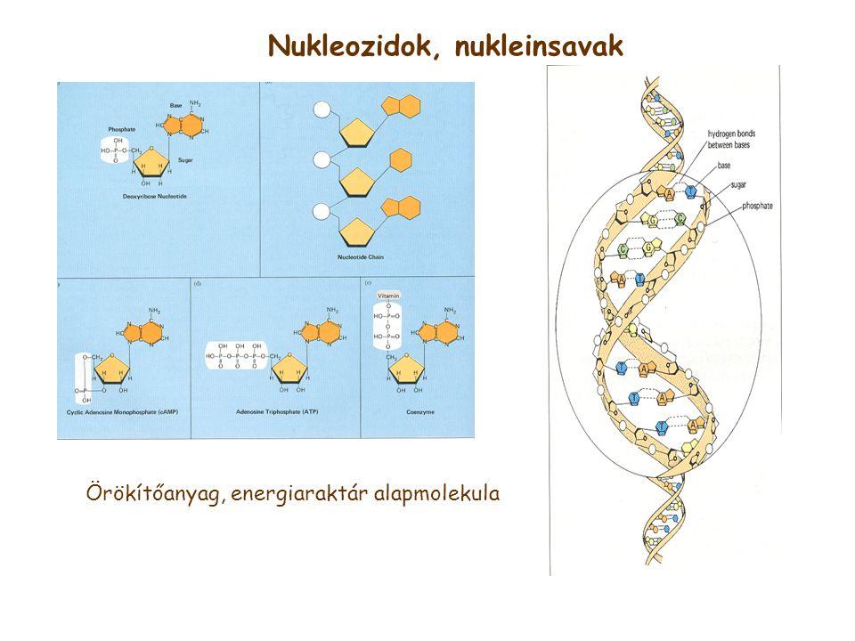 Nukleozidok, nukleinsavak