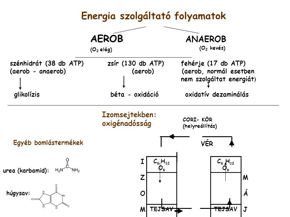Energia szolgáltató folyamatok