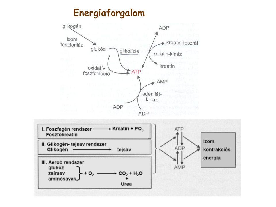 Energiaforgalom
