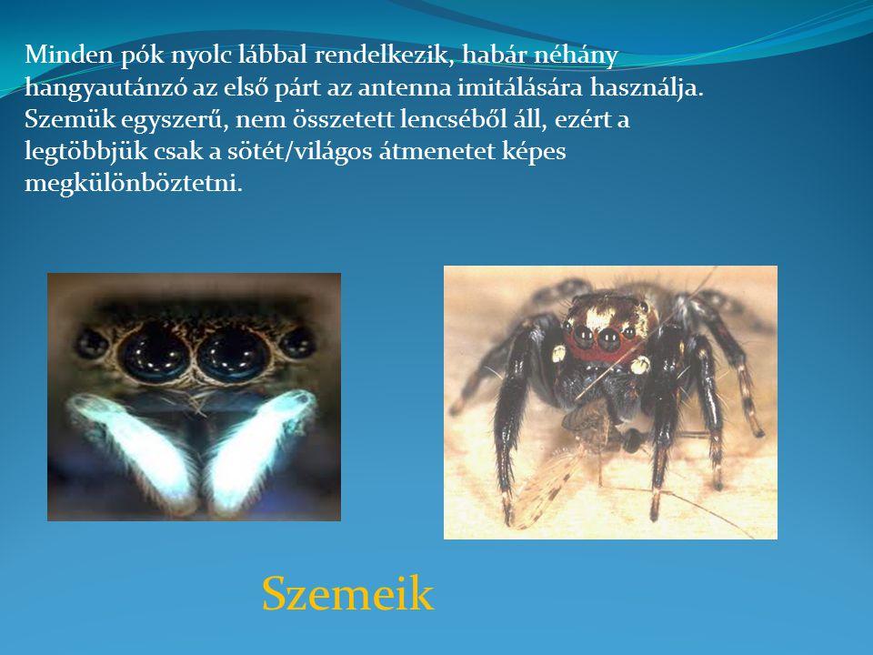 Minden pók nyolc lábbal rendelkezik, habár néhány hangyautánzó az első párt az antenna imitálására használja. Szemük egyszerű, nem összetett lencséből áll, ezért a legtöbbjük csak a sötét/világos átmenetet képes megkülönböztetni.