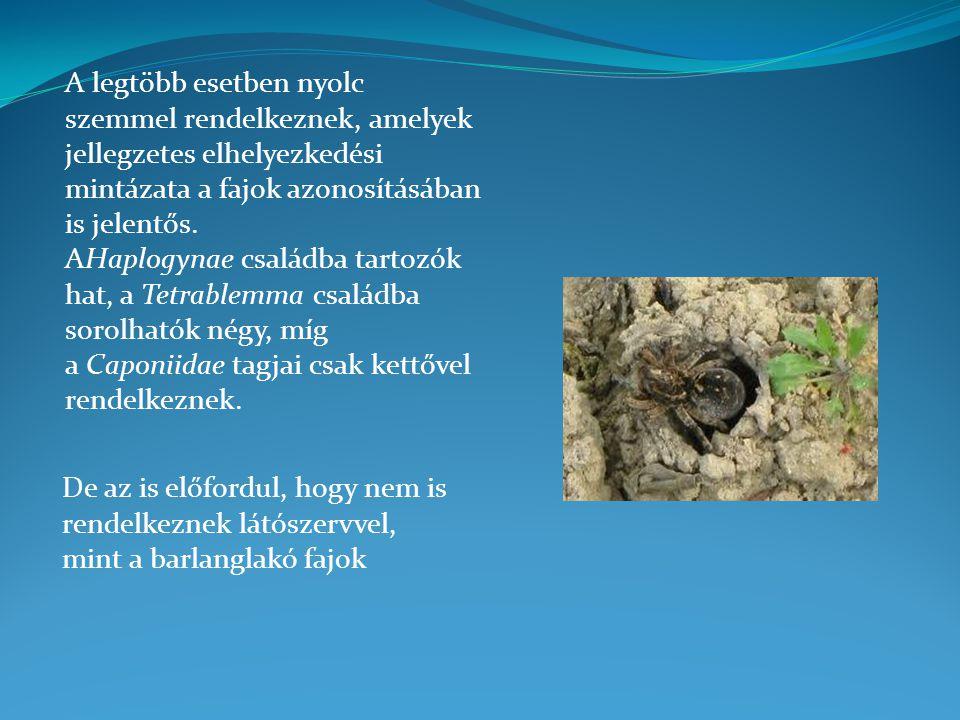 A legtöbb esetben nyolc szemmel rendelkeznek, amelyek jellegzetes elhelyezkedési mintázata a fajok azonosításában is jelentős. AHaplogynae családba tartozók hat, a Tetrablemma családba sorolhatók négy, míg a Caponiidae tagjai csak kettővel rendelkeznek.