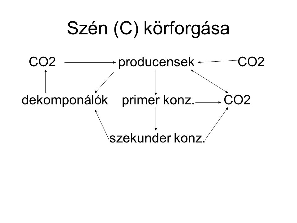 Szén (C) körforgása CO2 producensek CO2 dekomponálók primer konz. CO2