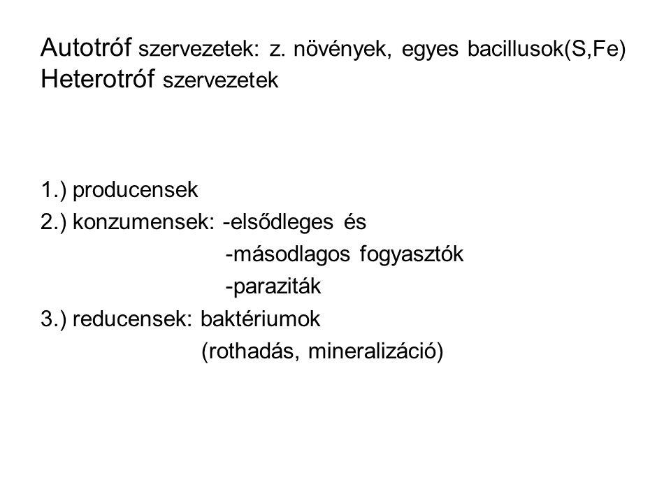 Autotróf szervezetek: z