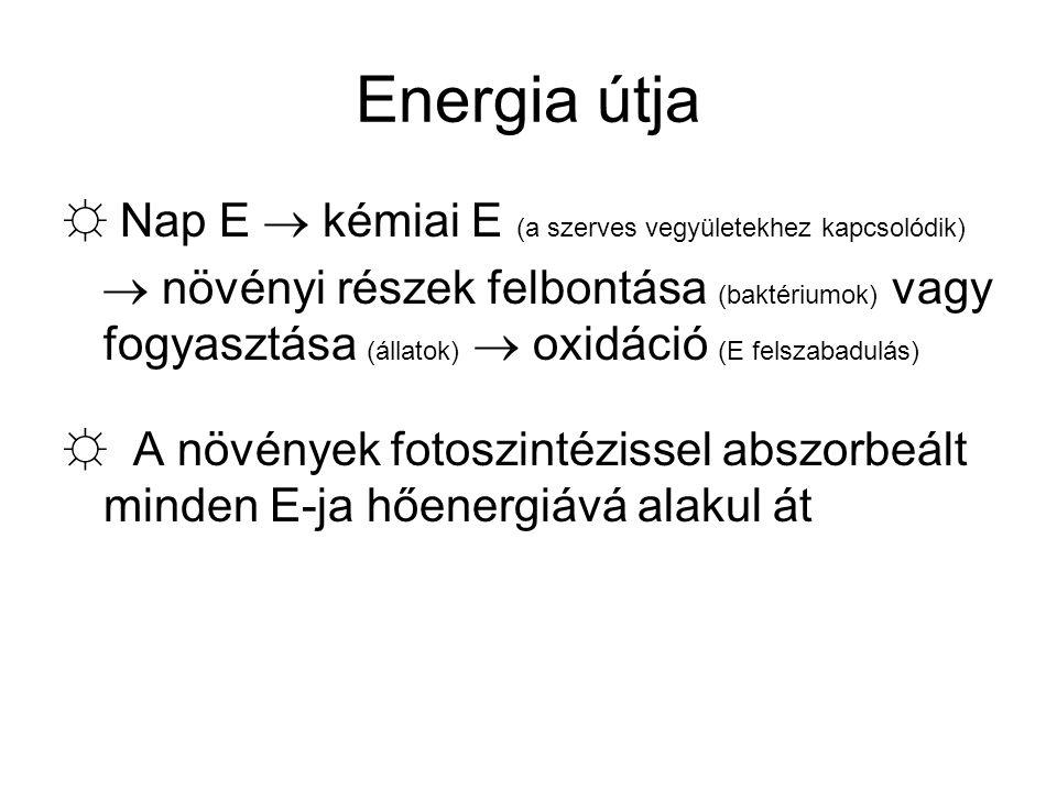 Energia útja ☼ Nap E  kémiai E (a szerves vegyületekhez kapcsolódik)