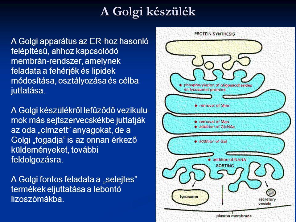 A Golgi készülék