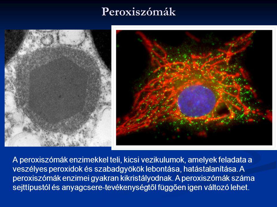 Peroxiszómák