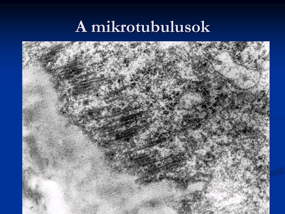 A mikrotubulusok