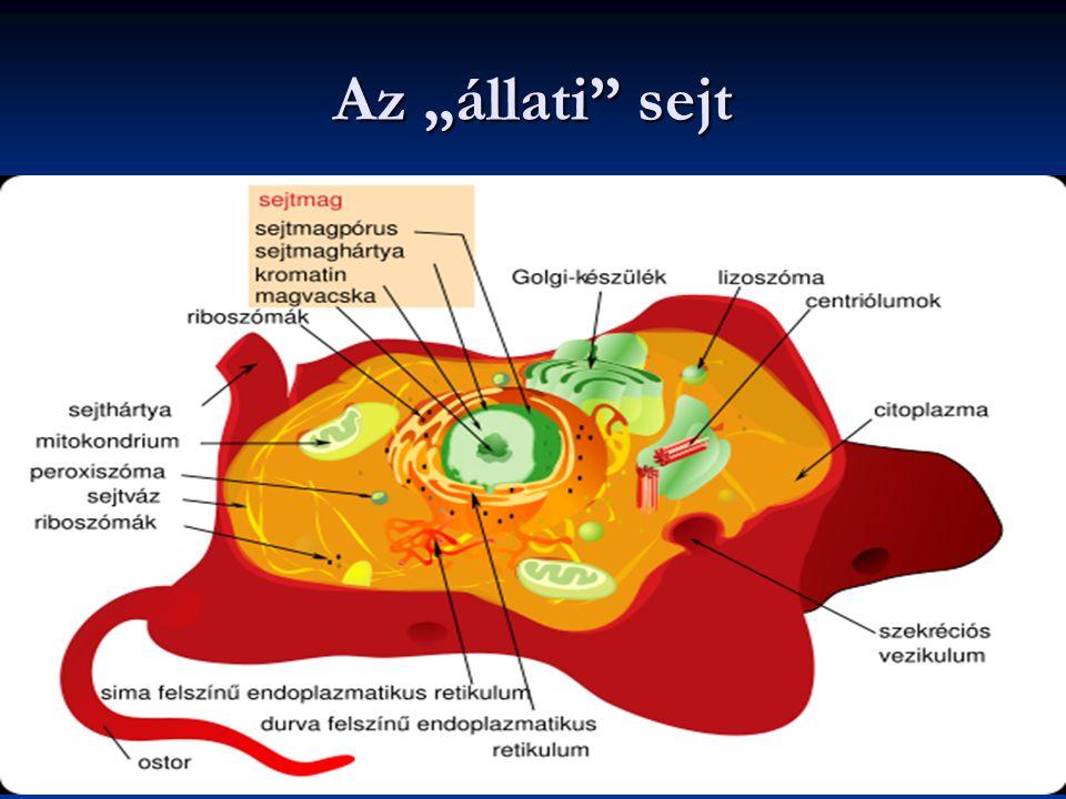 """Az """"állati sejt"""