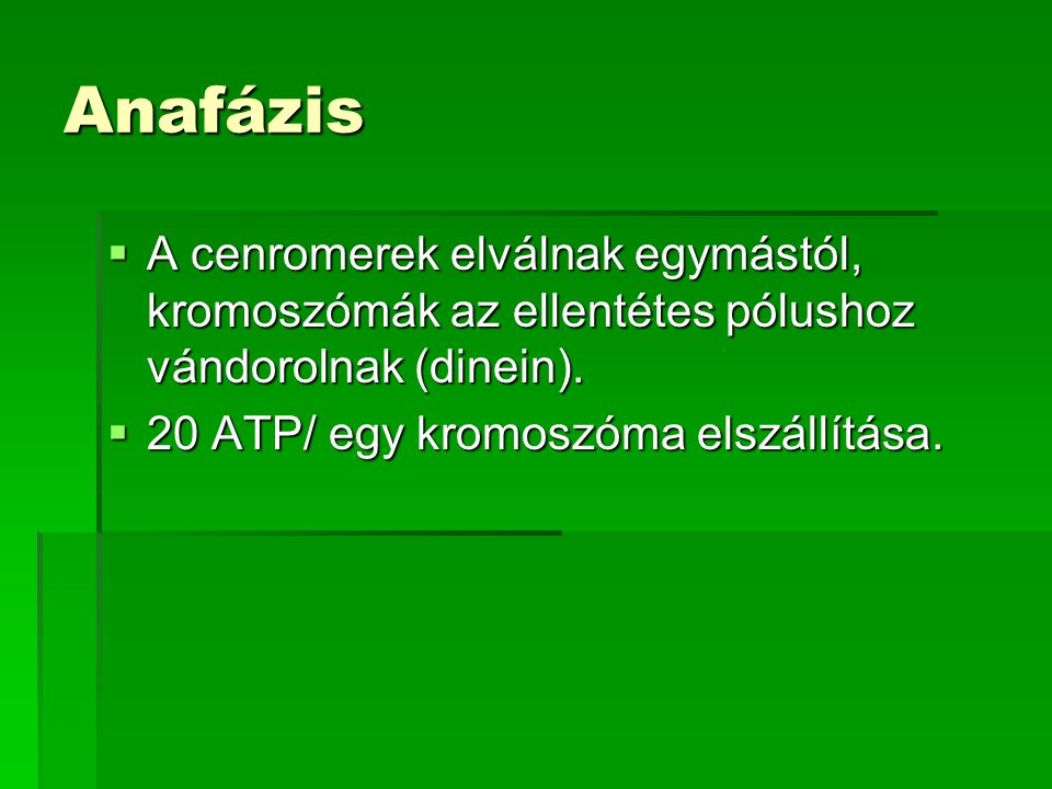 Anafázis A cenromerek elválnak egymástól, kromoszómák az ellentétes pólushoz vándorolnak (dinein).