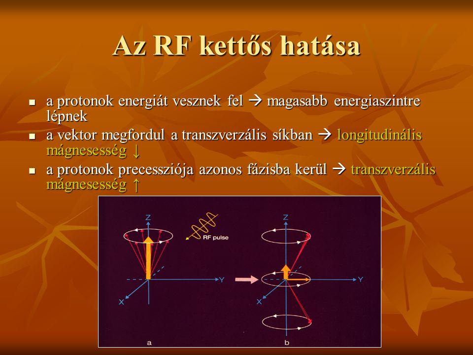 Az RF kettős hatása a protonok energiát vesznek fel  magasabb energiaszintre lépnek.