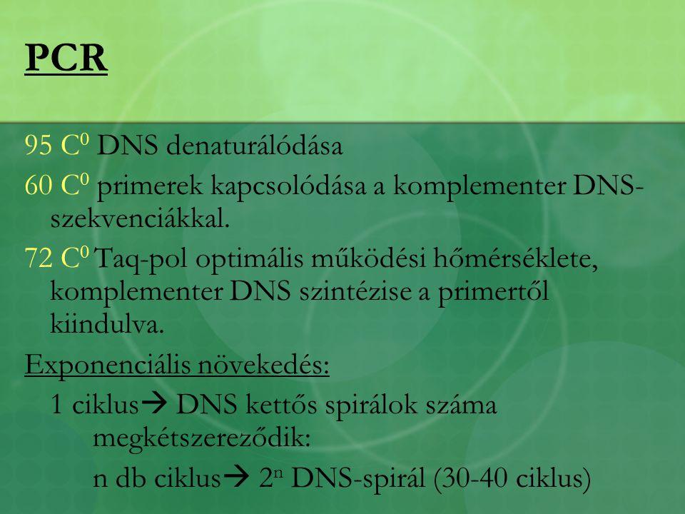PCR 95 C0 DNS denaturálódása
