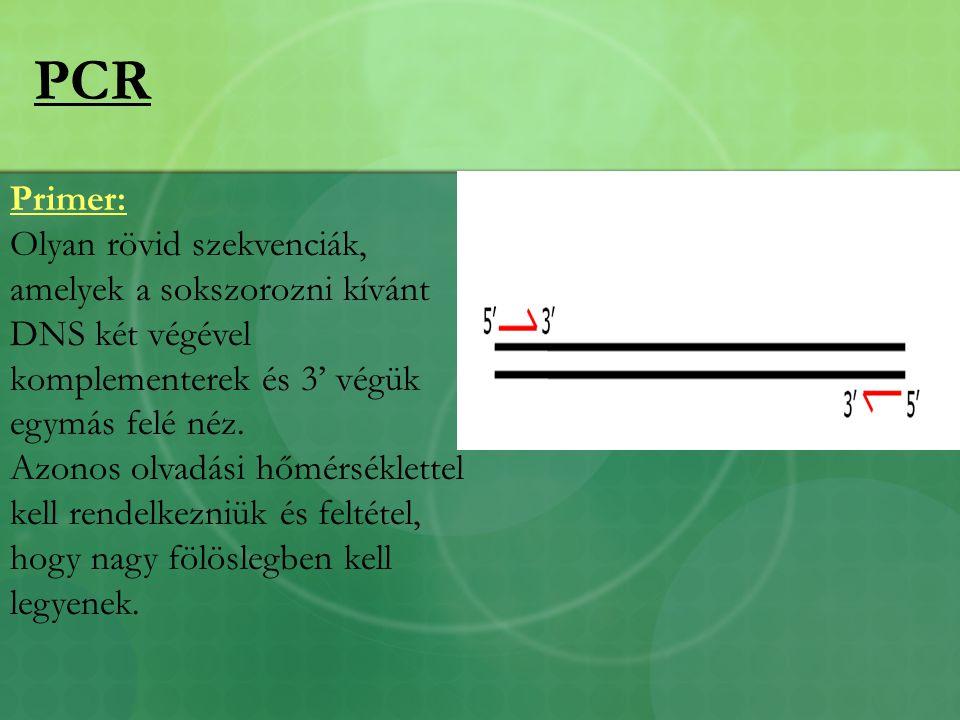 PCR Primer: Olyan rövid szekvenciák, amelyek a sokszorozni kívánt DNS két végével komplementerek és 3' végük egymás felé néz.