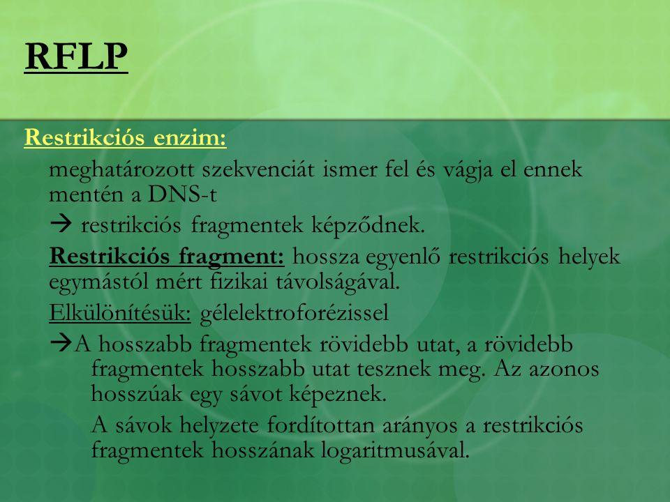 RFLP Restrikciós enzim: