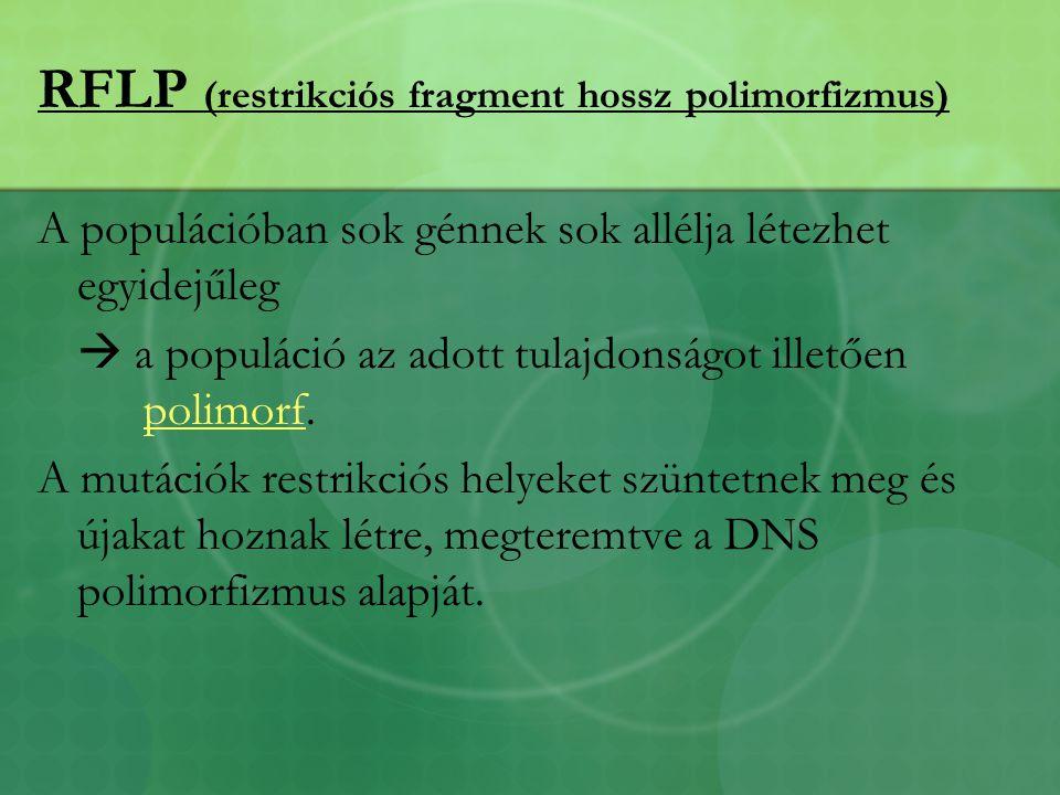 RFLP (restrikciós fragment hossz polimorfizmus)