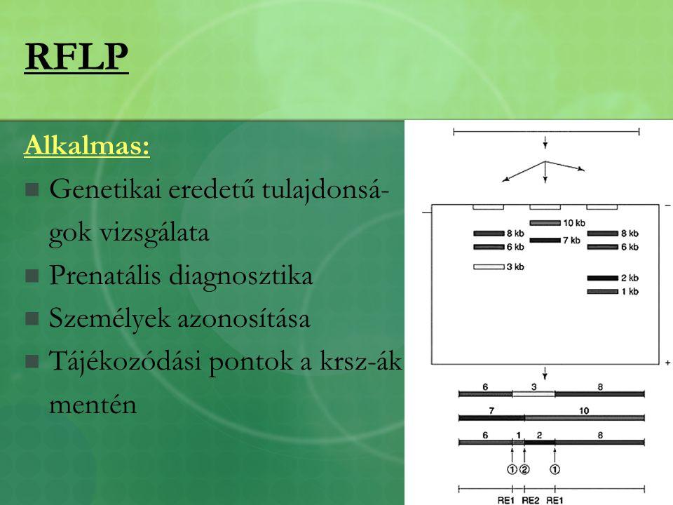 RFLP Alkalmas: Genetikai eredetű tulajdonsá- gok vizsgálata