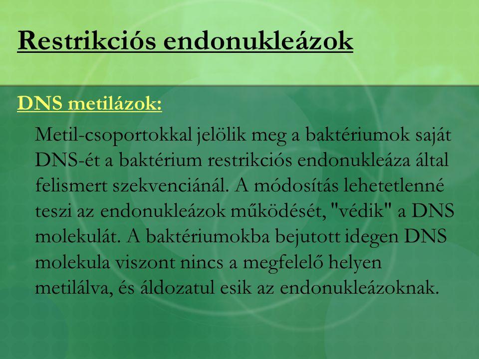 Restrikciós endonukleázok